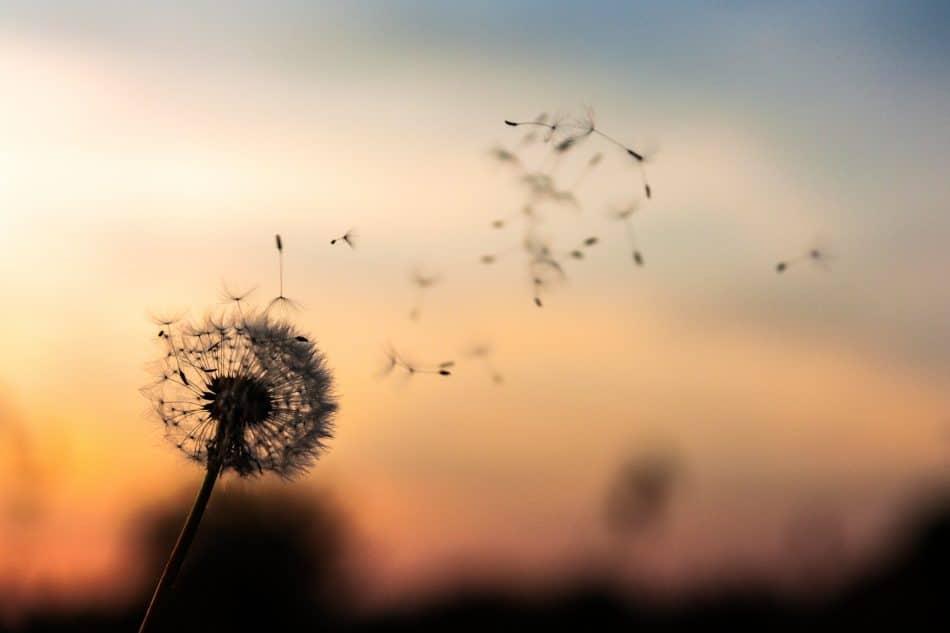 naturel-factory Les solutions du quotidien pour améliorer la qualité de notre air intérieur